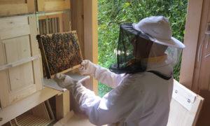 Kmetija Lešnik - pregled čebel