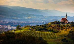 Mariborske trte, vir: Slovenia for you