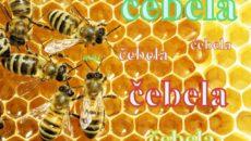 satje-čebele