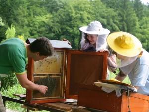 Prikazovanje čebel